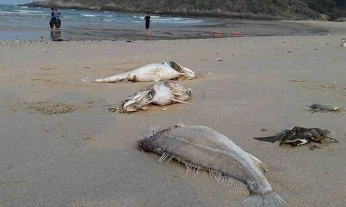 Hỗ trợ ngư dân và doanh nghiệp khắc phục hậu quả do cá chết ở miền Trung