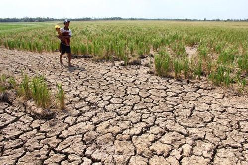 Gần 226.000 gia đình ở ĐBSCL thiếu trầm trọng nước sinh hoạt