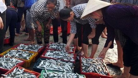 Người bán cá tại TP.HCM khốn khổ vì  tin đồn