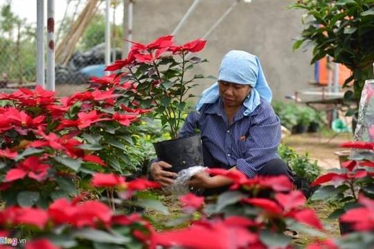 Làng hoa đẹp ít ai biết ở Hưng Yên