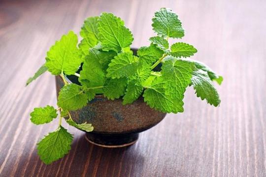 5 loại rau thơm dễ trồng và làm đẹp ngôi nhà