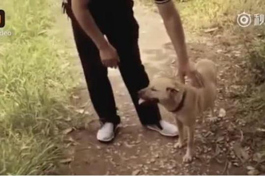 Chú chó đánh hơi cứu mạng bé trai bị chôn sống