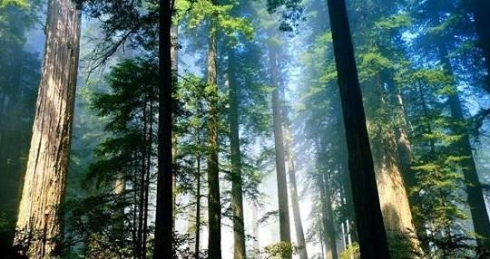 Xem xét trách nhiệm các địa phương bị giảm diện tích rừng tự nhiên