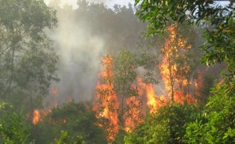 Vĩnh Phúc: Cháy 15 ha rừng phòng hộ tại nơi định làm nghĩa trang gây nhiều tranh cãi