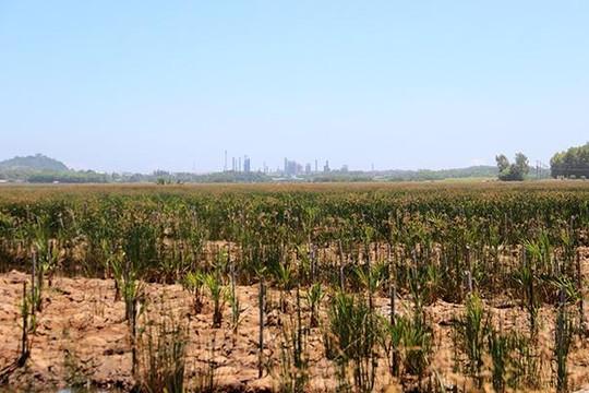 Rừng đang trồng phải 'quy hoạch' lại theo... tầm nhìn 2030 vì đụng dự án
