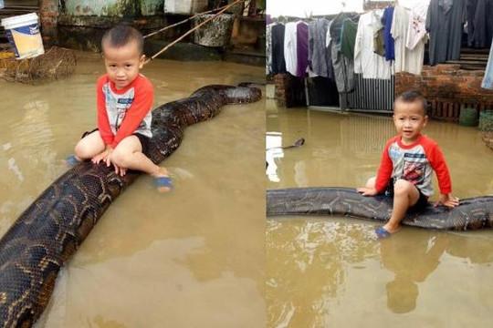 Rùng mình clip cậu nhóc Thanh Hóa cưỡi trăn khổng lồ 80 kg giữa mưa lũ