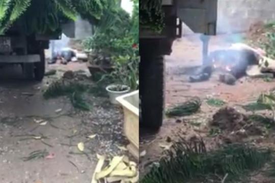 Rùng mình clip tài xế chết cháy vì cẩu cây lên vướng dây điện ở Hưng Yên