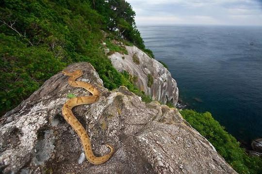 Đến hòn đảo rắn độc nguy hiểm nhất hành tinh