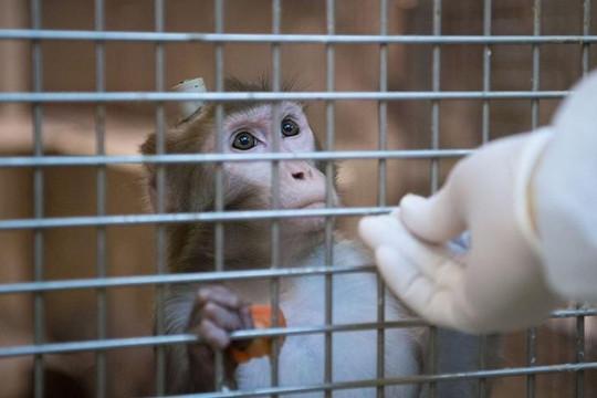 EU lên án thử nghiệm khí thải 'vô đạo đức' trên khỉ và người