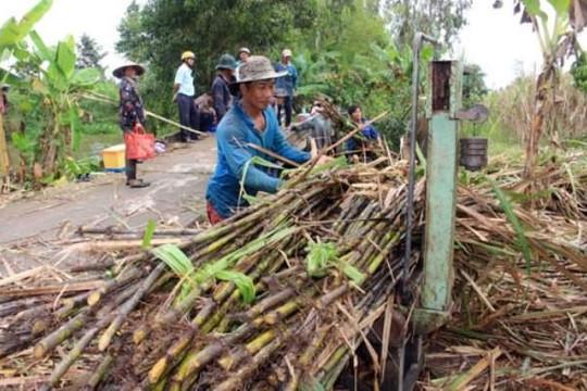 Ngành mía đường Việt Nam lại than trời bởi đường nhập lậu