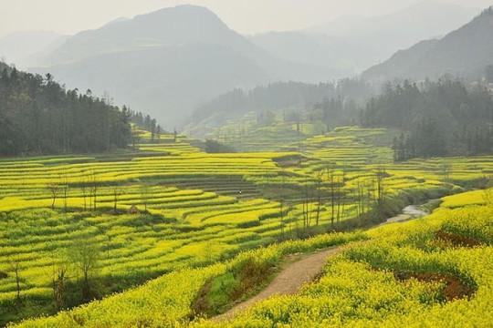 8 điểm ngắm hoa tuyệt đẹp trên khắp châu Á
