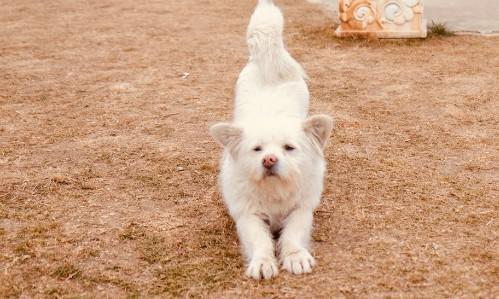 Bhutan, vương quốc của chó hoang và niềm tin hạnh phúc