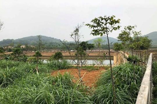 Thứ trưởng Bộ TN-MT mua gom hàng chục ngàn mét vuông đất lâm trường