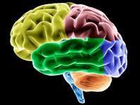 Phát hiện con đường 'truyền tin' trong đại não