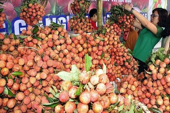 Người dân Bắc Giang thu về gần 6.000 tỉ đồng mùa vải năm nay