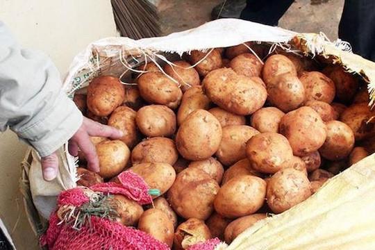 Nông sản Trung Quốc nhái hàng Đà Lạt ồ ạt về TP.HCM