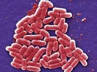 Dùng công nghệ chỉnh sửa gien CRISPR chống vi khuẩn kháng thuốc