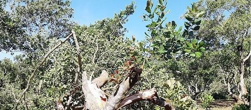 An Giang: Mưa lớn và ngập nước, cây đổ làm 2 mẹ con tử nạn