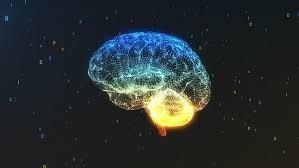 Phát hiện vùng não mới chưa từng biết trước đây