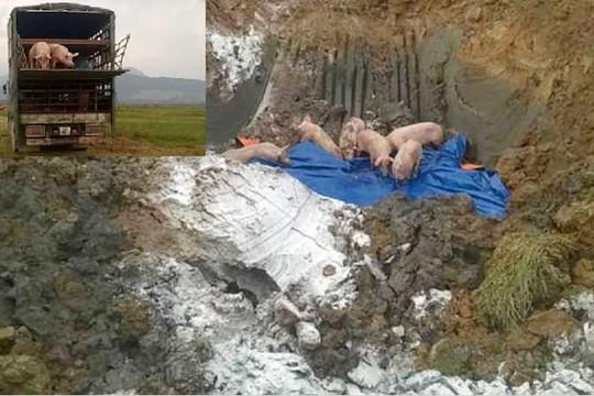Tiêu hủy gần 12 tấn lợn bệnh trên xe tải cố tình tránh trạm kiểm dịch