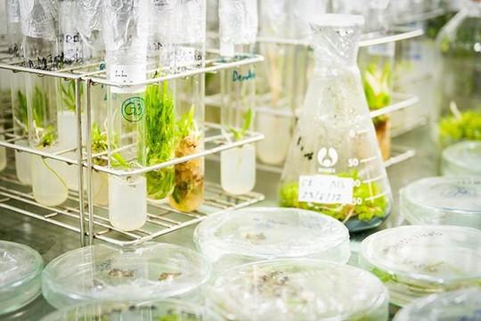 Ban hành quy chế hoạt động của Khu công nghệ cao công nghệ sinh học Đồng Nai