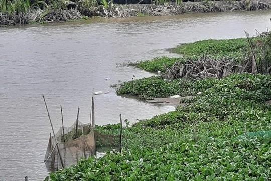 Long An: Người dân phải dùng nước bẩn dưới kênh làm nước sinh hoạt