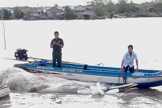 Cà Mau: Ngư dân vớt xác cá voi nặng gần 20 tấn trôi dạt trên biển
