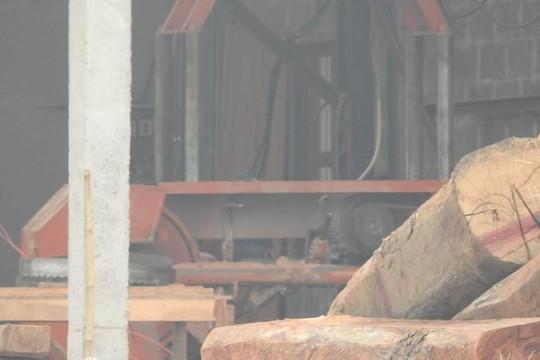 Quảng Ninh, Quảng Bình: Lập đoàn kiểm tra việc 'chiếm đường làm xưởng cưa'