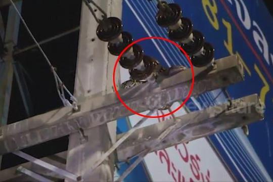 Clip trăn 2 mét treo lơ lửng trên cột điện khiến nhiều người hoảng sợ