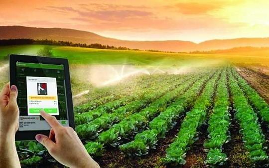 AI và Blockchain song hành tạo đặc trưng cho nông sản Việt