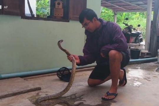 Clip thanh niên bắt rắn hổ mang bằng tay không theo cách kỳ lạ