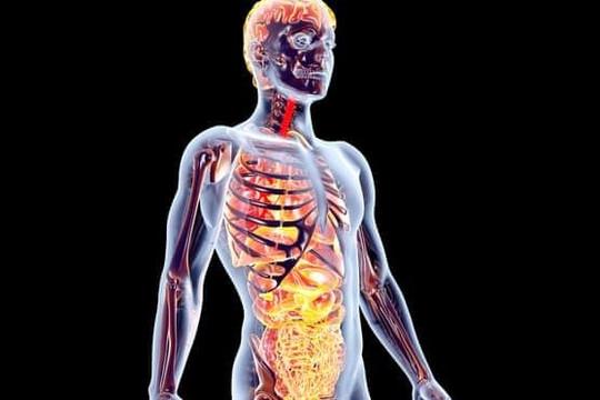 Thêm bằng chứng khẳng định ruột là nơi khởi phát bệnh Parkinson