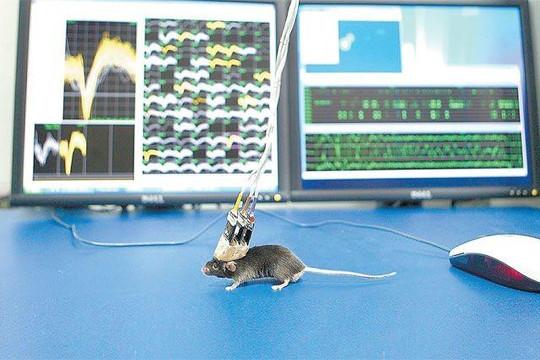 Nga tìm được hợp chất cứu tế bào thần kinh khi bị đột quỵ