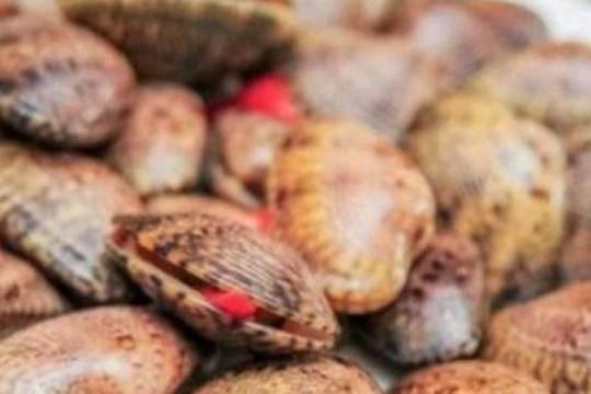 Cà Mau: Xác minh thông tin bịa đặt: ăn sò lụa đỏ tử vong