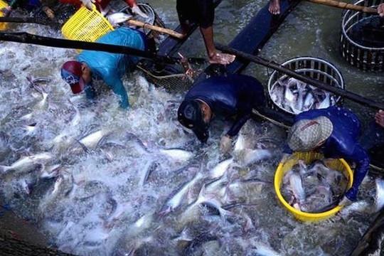 Mỹ giảm thuế chống bán phá giá đối với cá tra Việt Nam