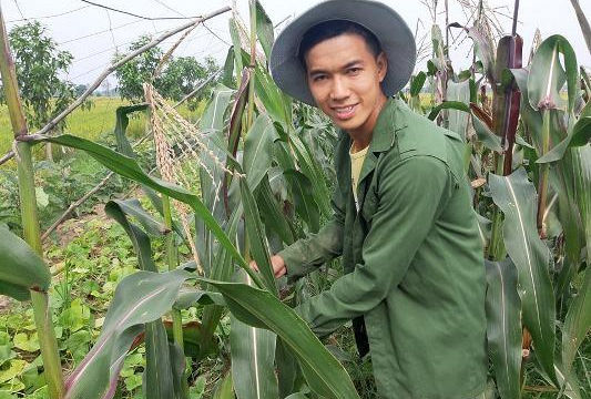 Anh nhân viên ngân hàng trồng bắp đỏ sạch thu về tiền triệu