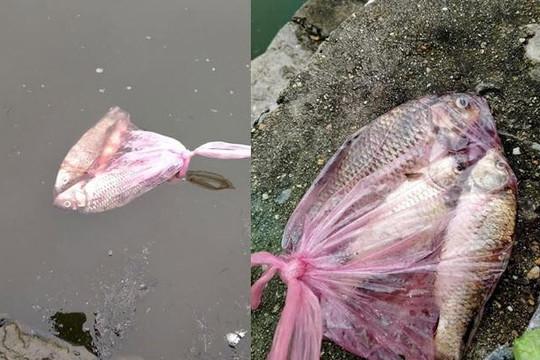 Bị chửi vì phóng sinh cá chép dưới cống, nữ sinh nói: 'Chưa cho xuống bồn cầu là may'