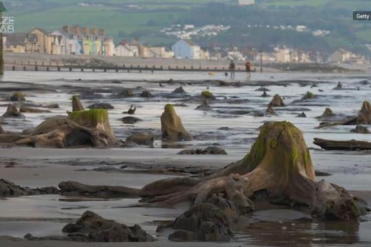 Khu rừng cổ đại chìm dưới đáy biển hơn 4.500 năm