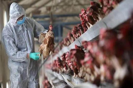 Thủ tướng chỉ đạo không để dịch chồng dịch khi Trung Quốc đối mặt thêm H5N1