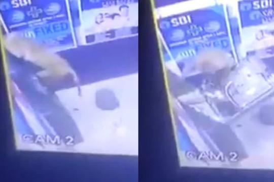 Clip khỉ tay không mở máy ATM chỉ vài giây, không dùng thuốc nổ như người