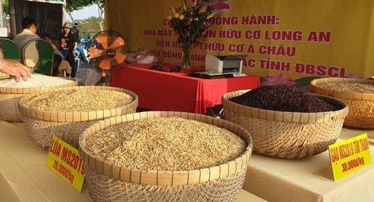 Giá lúa tăng cao, nông dân miền Tây Nam Bộ phấn khởi