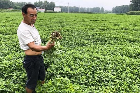 An ninh lương thực của Trung Quốc bị đe dọa