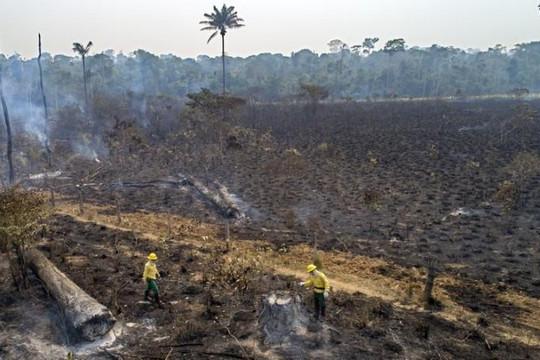 Rừng Amazon tiếp tục cháy dữ dội trong năm 2020 và Trái đất đang nóng dần