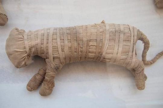 Khám phá các xác ướp động vật hơn 1.000 năm tuổi
