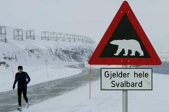 Gấu Bắc Cực tấn công khu cắm trại, cắn chết người ở Na Uy
