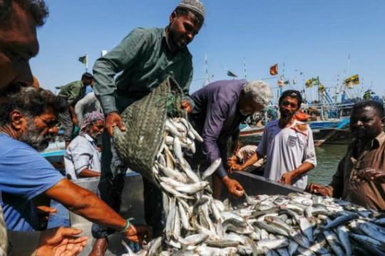 Ngư dân Pakistan phản đối tàu cá Trung Quốc vơ vét tài nguyên biển