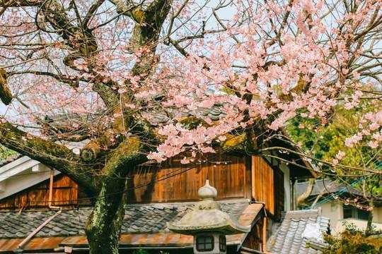 Cố đô Kyoto - nơi lưu giữ ký ức Nhật Bản xưa