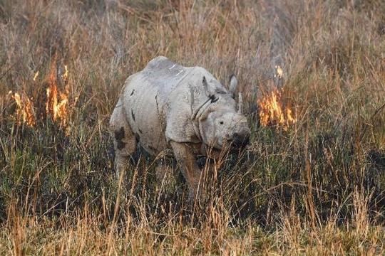 Động vật hoang dã trên thế giới giảm hơn 2/3 trong nửa thế kỷ
