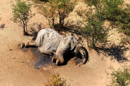 330 con voi chết thảm vì vi khuẩn lam trong nước