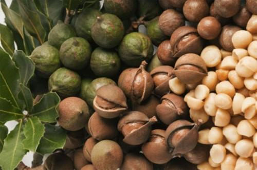 Hiến kế giúp cây mác ca thành lợi thế cho nền kinh tế Việt Nam